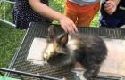 I love the soft furry bunny