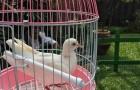 My pigeon's house