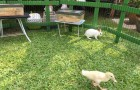 Our petting farm