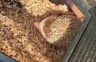 Such a cute hedgehog